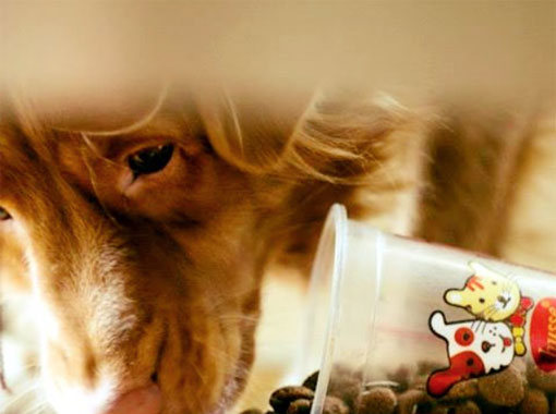 UK Pet Food Industry Rises to a Value of £3 Billion
