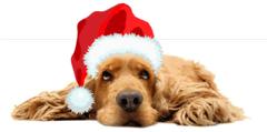PetStay Dog
