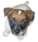 Oscar Pet Foods Franchise Opportunity_2