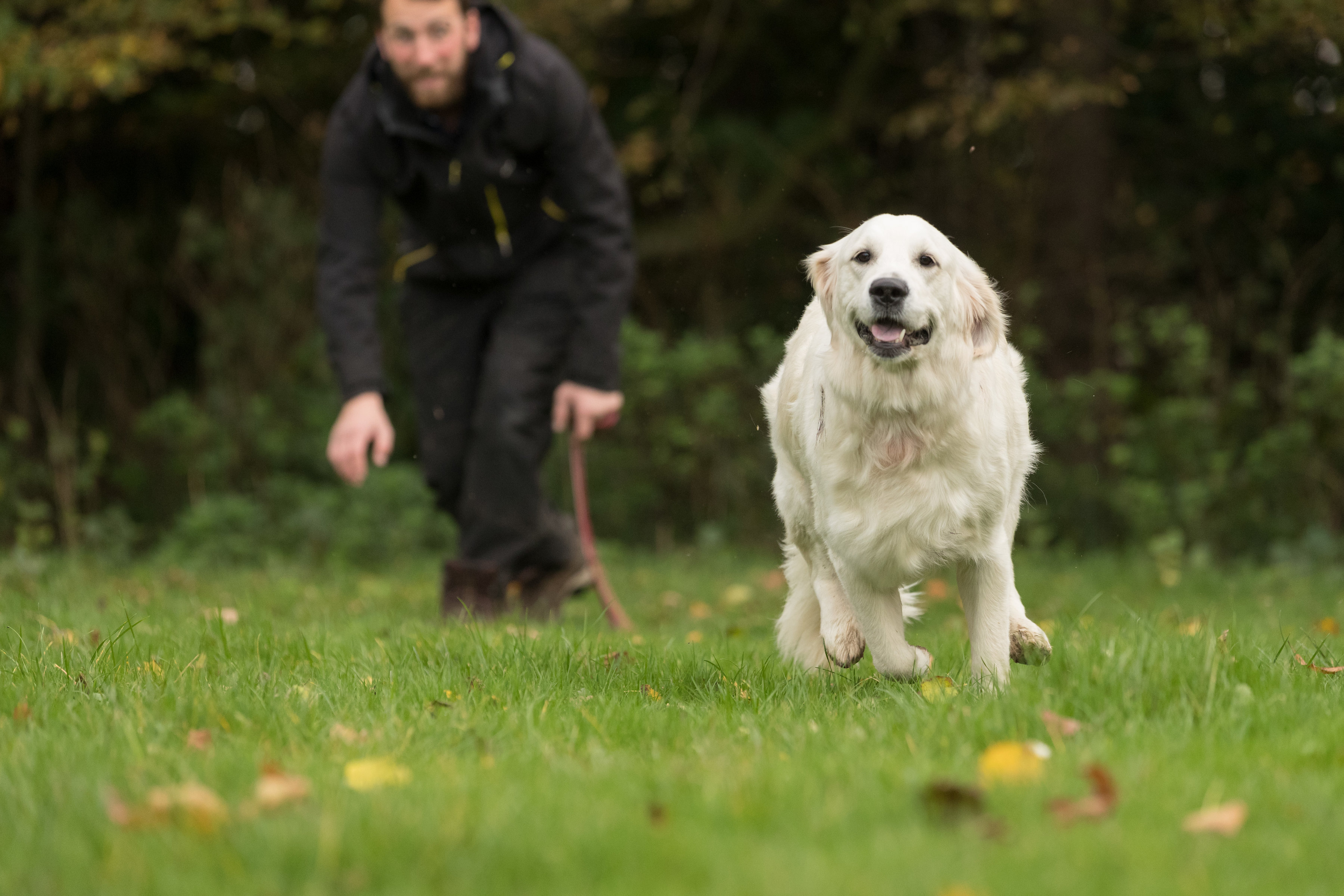 Leading The Way Pet Care News Image